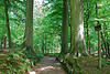 The foret des Soignes in Brussels