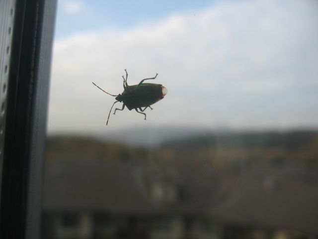 a beetle on a window