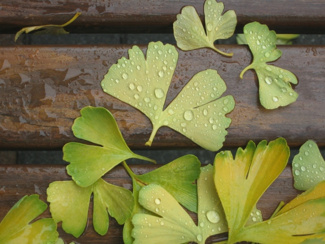 Wet leaves on a bench