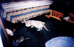 kittens in bedroom