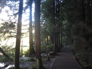 trail at Mundy Lake in Mundy Park.