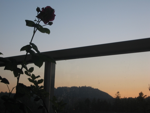 Rose silhouetted against the evening sky and Burnaby Mountain