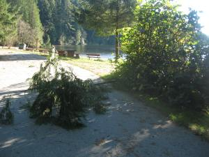 It was a cold windy ride to Sasamat Lake. I saw this huge branch fall on the path: I could have been hit!
